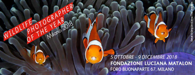 Wildlife Photographer of the Year - Milano 5 ottobre/9 dicembre